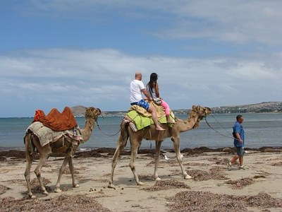 Camels on the beach, Australia